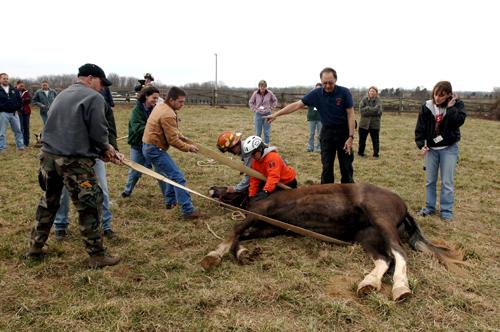 eku update animal rescue 500x332